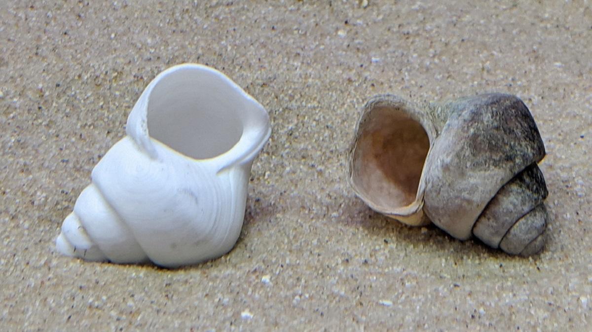 200521_shells-1